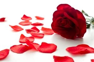 rosesandpetals