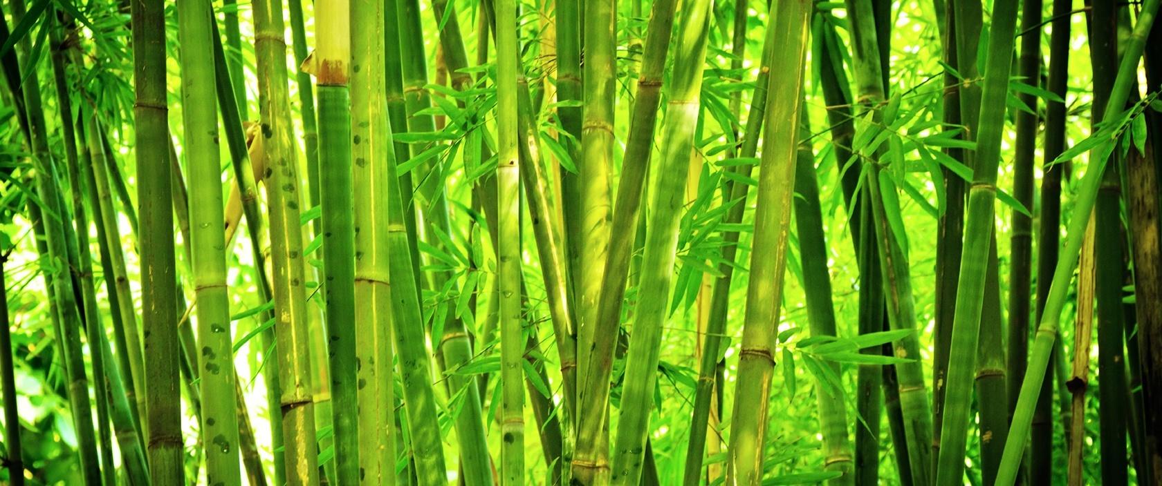 BambooMilk